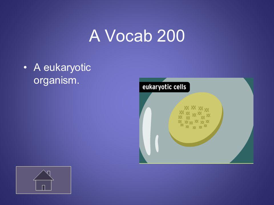 A Vocab 200 A eukaryotic organism.