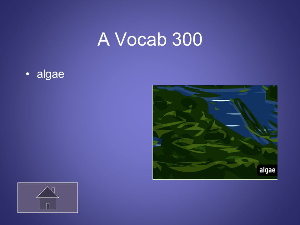 A Vocab 300 algae
