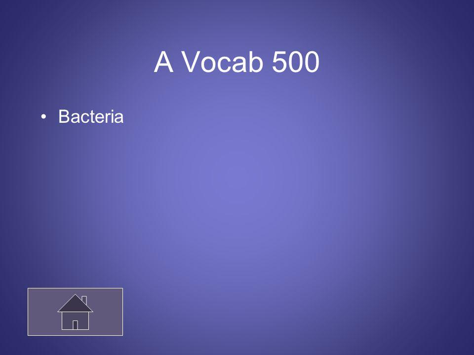 A Vocab 500 Bacteria