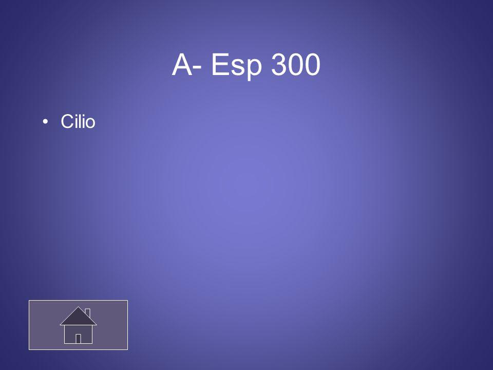 A- Esp 300 Cilio