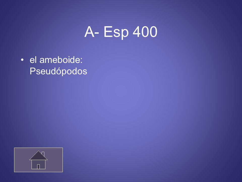 A- Esp 400 el ameboide: Pseudópodos