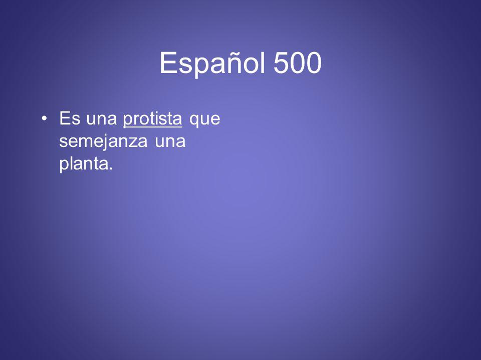Español 500 Es una protista que semejanza una planta.