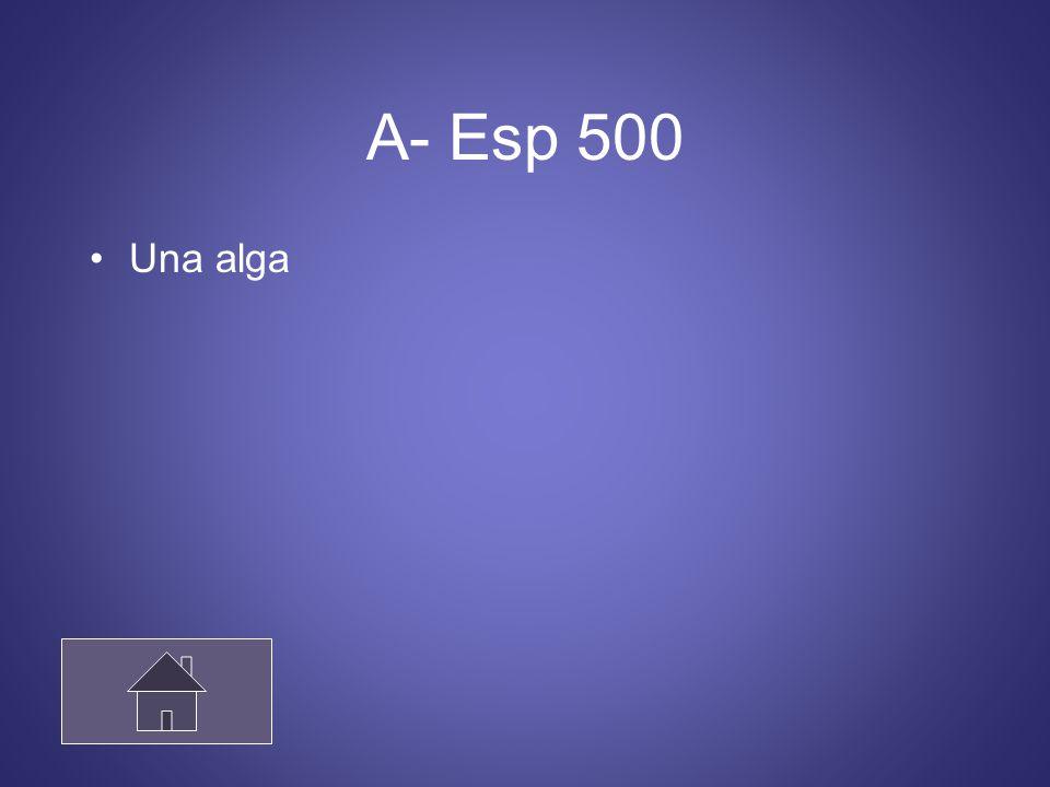 A- Esp 500 Una alga