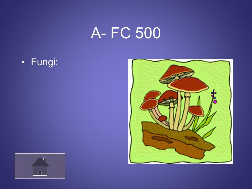 A- FC 500 Fungi: