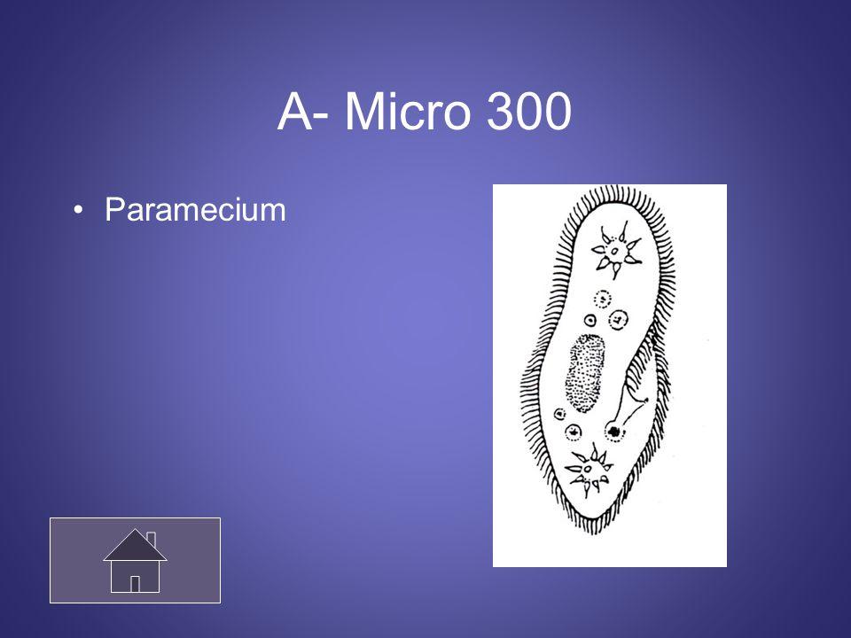 Vocabulario 400 A microscopic, animal-like protist. Microscopic consumer