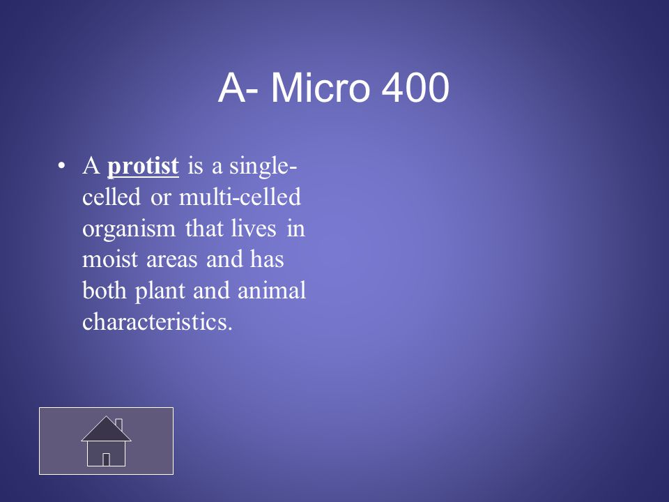 Microorganismos 500 Give an example of an animal-like protist and a plant-like protist.