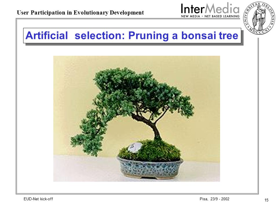 15 User Participation in Evolutionary Development Pisa, 23/9 - 2002EUD-Net kick-off Artificial selection: Pruning a bonsai tree