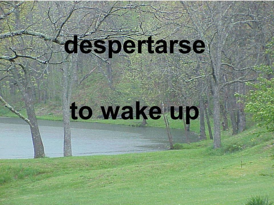 despertarse to wake up