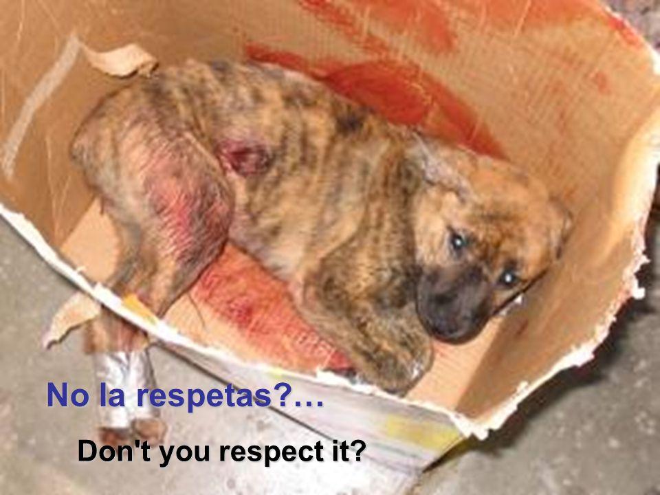 Vita Noble Powerpoints No la respetas … Don t you respect it