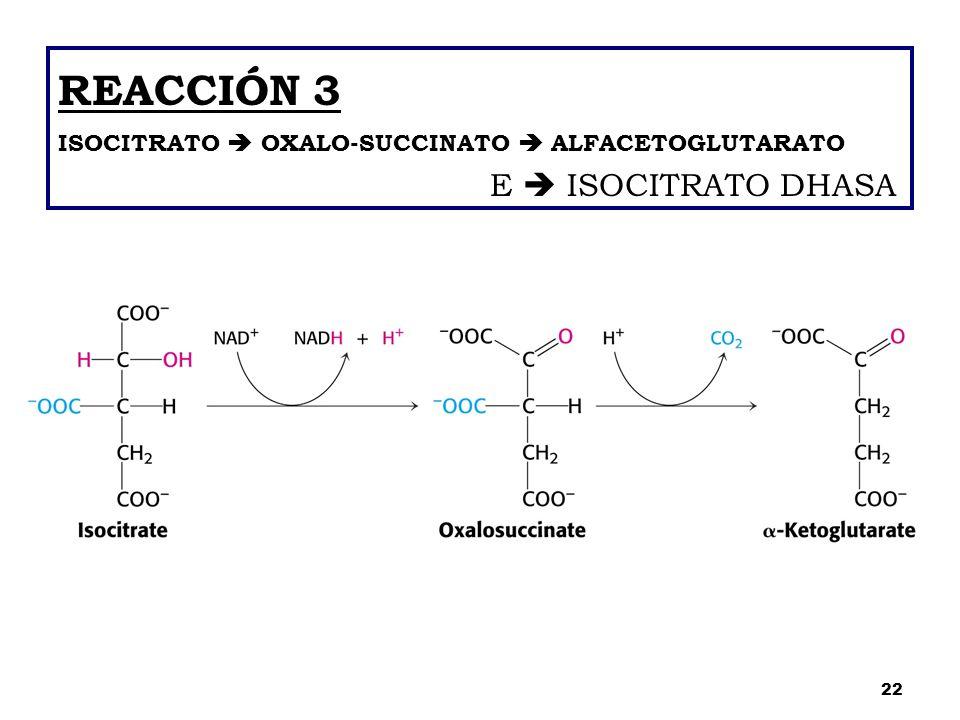 REACCIÓN 3 ISOCITRATO  OXALO-SUCCINATO  ALFACETOGLUTARATO E  ISOCITRATO DHASA 22