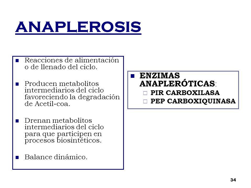 ANAPLEROSIS Reacciones de alimentación o de llenado del ciclo. Producen metabolitos intermediarios del ciclo favoreciendo la degradación de Acetil-coa