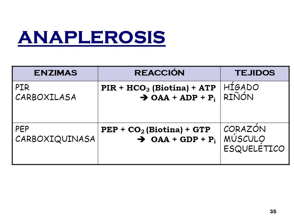 ANAPLEROSIS ENZIMASREACCIÓNTEJIDOS PIR CARBOXILASA PIR + HCO 3 (Biotina) + ATP  OAA + ADP + P i HÍGADO RIÑÓN PEP CARBOXIQUINASA PEP + CO 2 (Biotina)