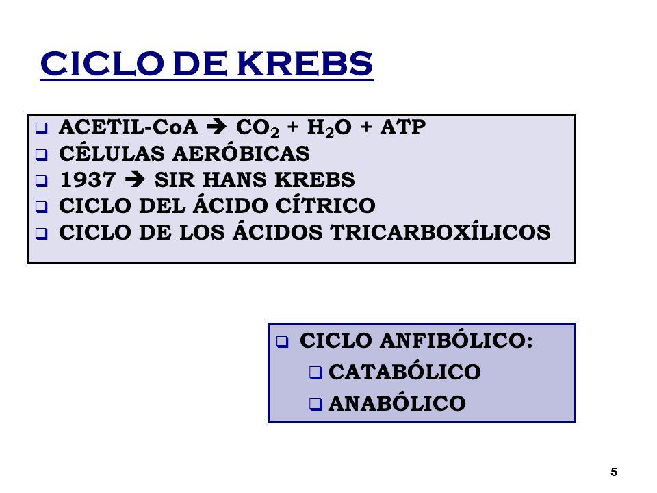 CICLO DE KREBS  ACETIL-CoA  CO 2 + H 2 O + ATP  CÉLULAS AERÓBICAS  1937  SIR HANS KREBS  CICLO DEL ÁCIDO CÍTRICO  CICLO DE LOS ÁCIDOS TRICARBOX