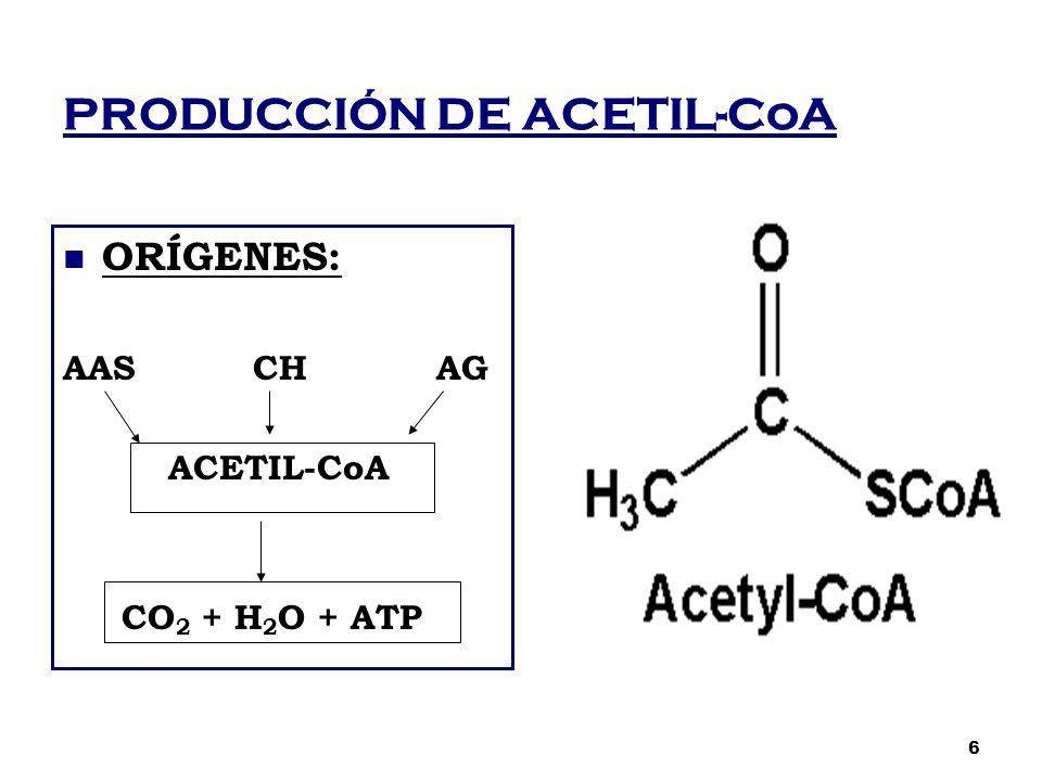 PRODUCCIÓN DE ACETIL-CoA ORÍGENES: AAS CH AG ACETIL-CoA CO 2 + H 2 O + ATP 6