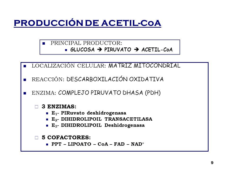 PRODUCCIÓN DE ACETIL-CoA PRINCIPAL PRODUCTOR: GLUCOSA  PIRUVATO  ACETIL-CoA LOCALIZACIÓN CELULAR: MATRIZ MITOCONDRIAL REACCIÓN: DESCARBOXILACIÓN OXI