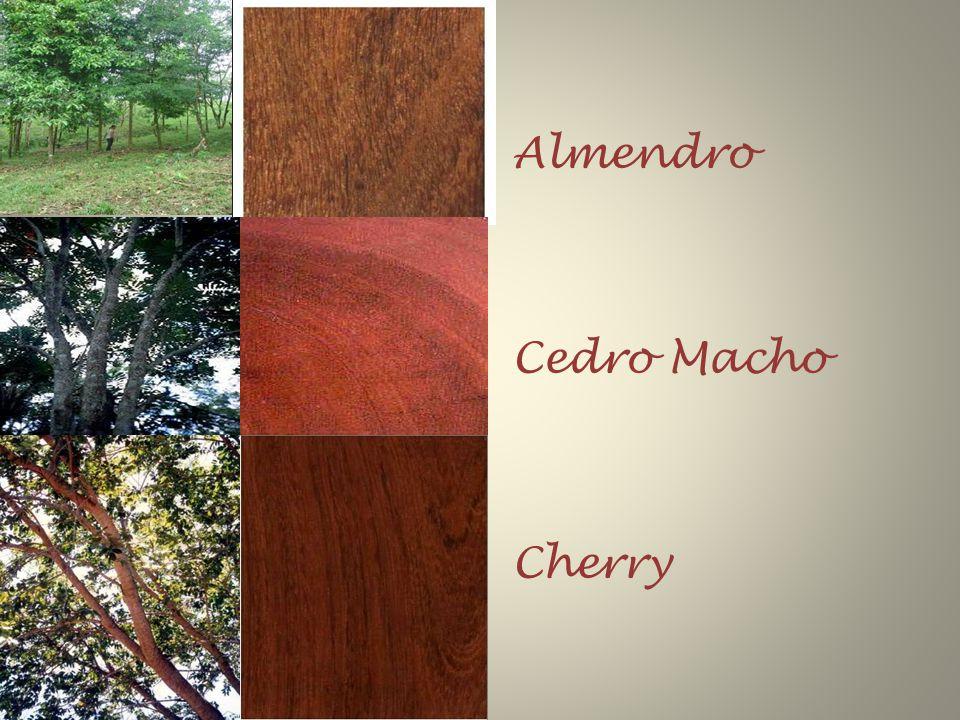 Almendro Cedro Macho Cherry