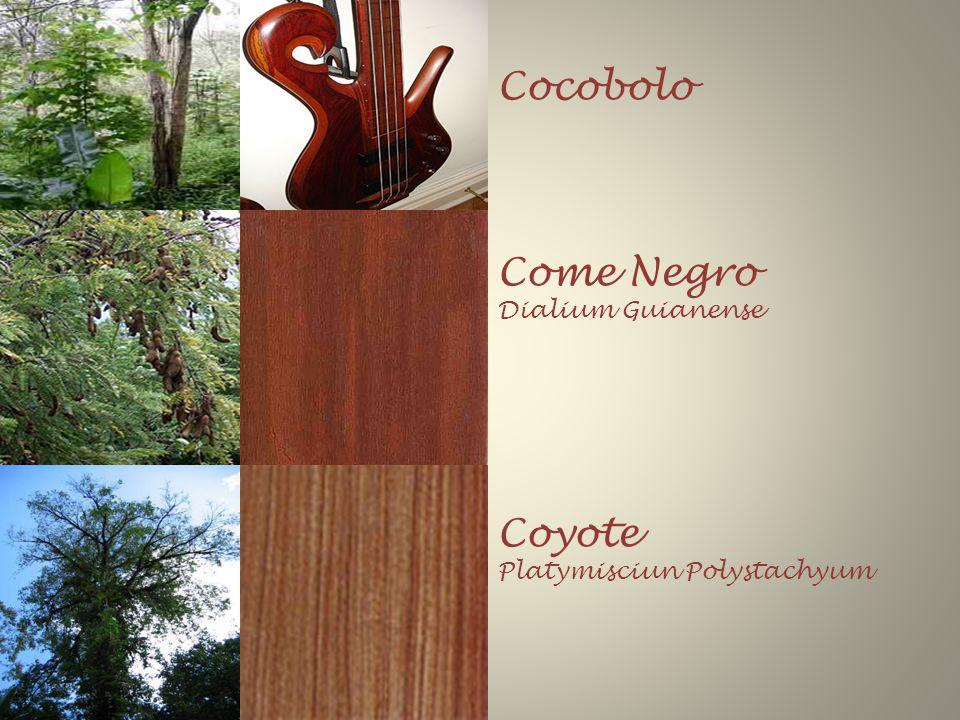 Cocobolo Come Negro Dialium Guianense Coyote Platymisciun Polystachyum