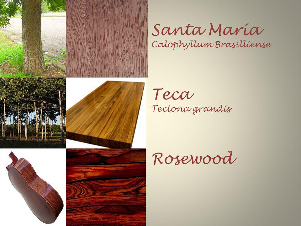 Santa María Calophyllum Brasilliense Teca Tectona grandis Rosewood