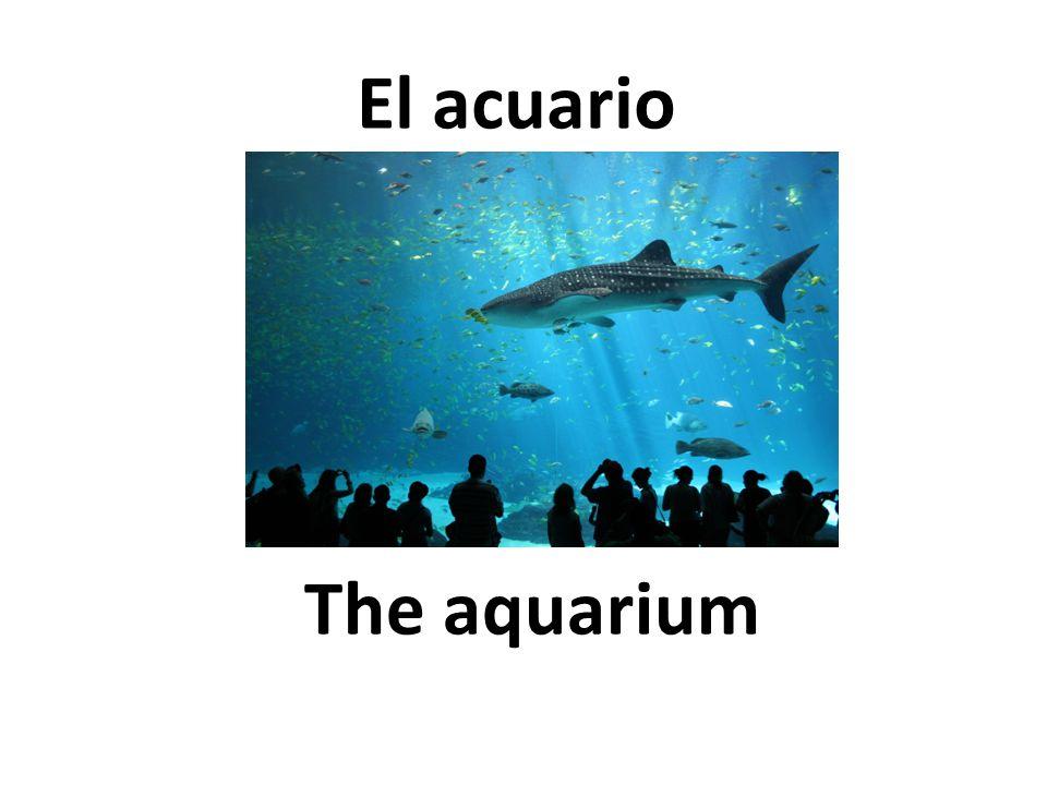 The aquarium El acuario