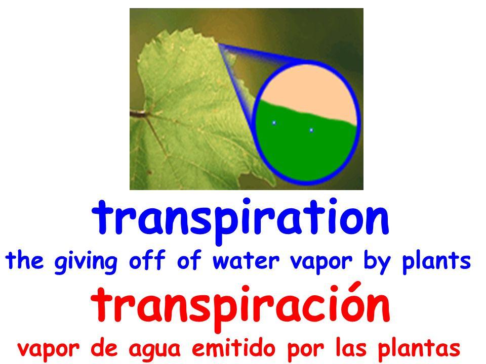 transpiration the giving off of water vapor by plants transpiración vapor de agua emitido por las plantas