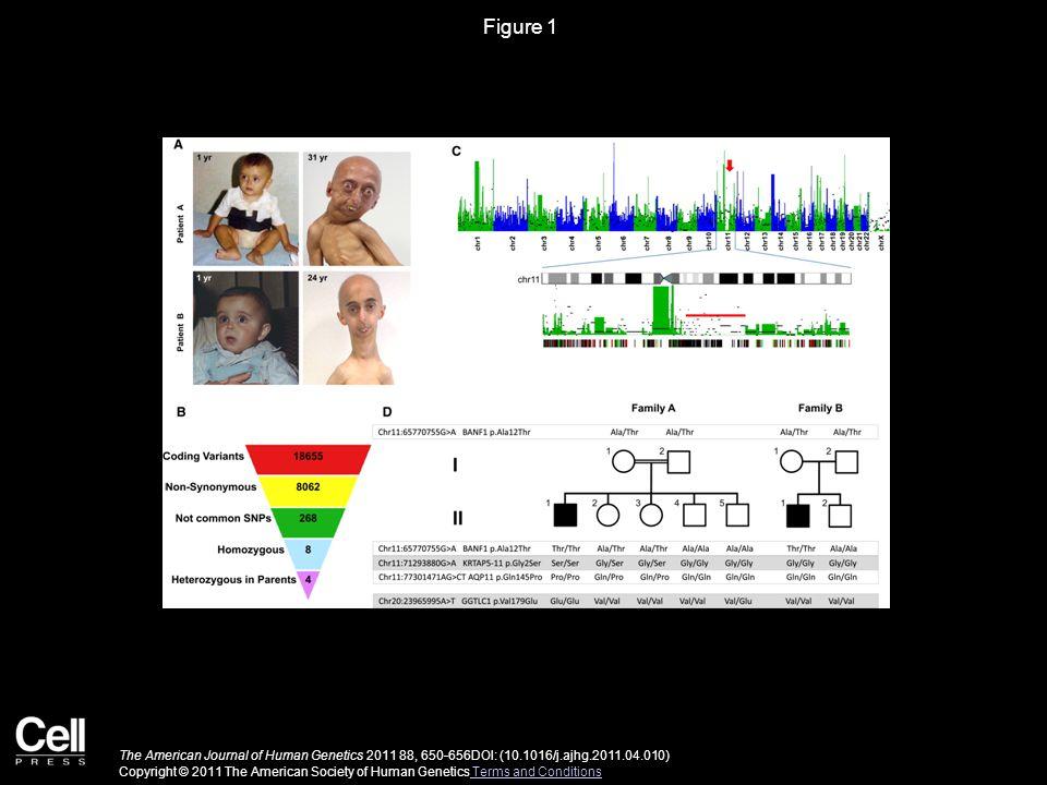 Figure 2 The American Journal of Human Genetics 2011 88, 650-656DOI: (10.1016/j.ajhg.2011.04.010) Copyright © 2011 The American Society of Human Genetics Terms and Conditions Terms and Conditions