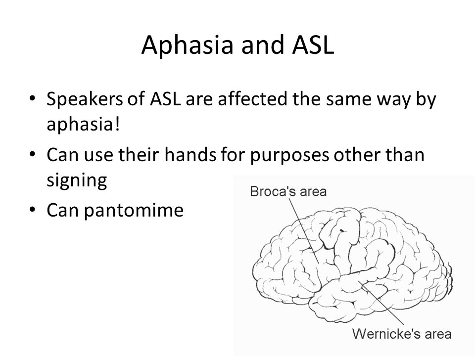Teaching Language to Apes Allen and Beatrice Gardner taught a chimp named Washoe a version of sign language Francine Patter raised gorillas Koko and Michael with signs Herbert Terrance worked with the chimp Nim Chimpsky