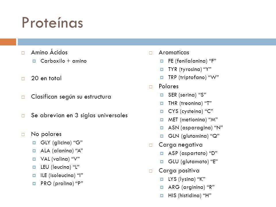Proteínas  Amino Ácidos  Carboxilo + amino  20 en total  Clasifican según su estructura  Se abrevian en 3 siglas universales  No polares  GLY (glicina) G  ALA (alanina) A  VAL (valina) V  LEU (leucina) L  ILE (isoleucina) I  PRO (prolina) P  Aromaticas  FE (fenilalanina) F  TYR (tyrosina) Y  TRP (triptofano) W  Polares  SER (serina) S  THR (treonina) T  CYS (cysteina) C  MET (metionina) M  ASN (asparagina) N  GLN (glutamina) Q  Carga negativa  ASP (aspartato) D  GLU (glutamato) E  Carga positiva  LYS (lysina) K  ARG (arginina) R  HIS (histidina) H