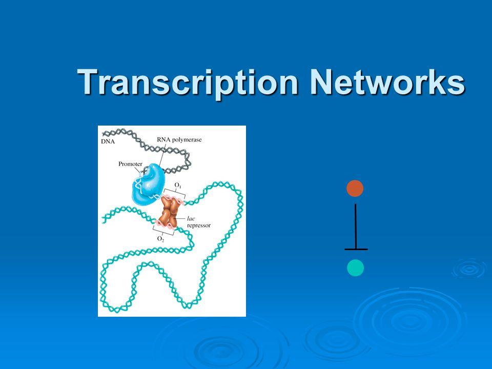 Transcription Networks