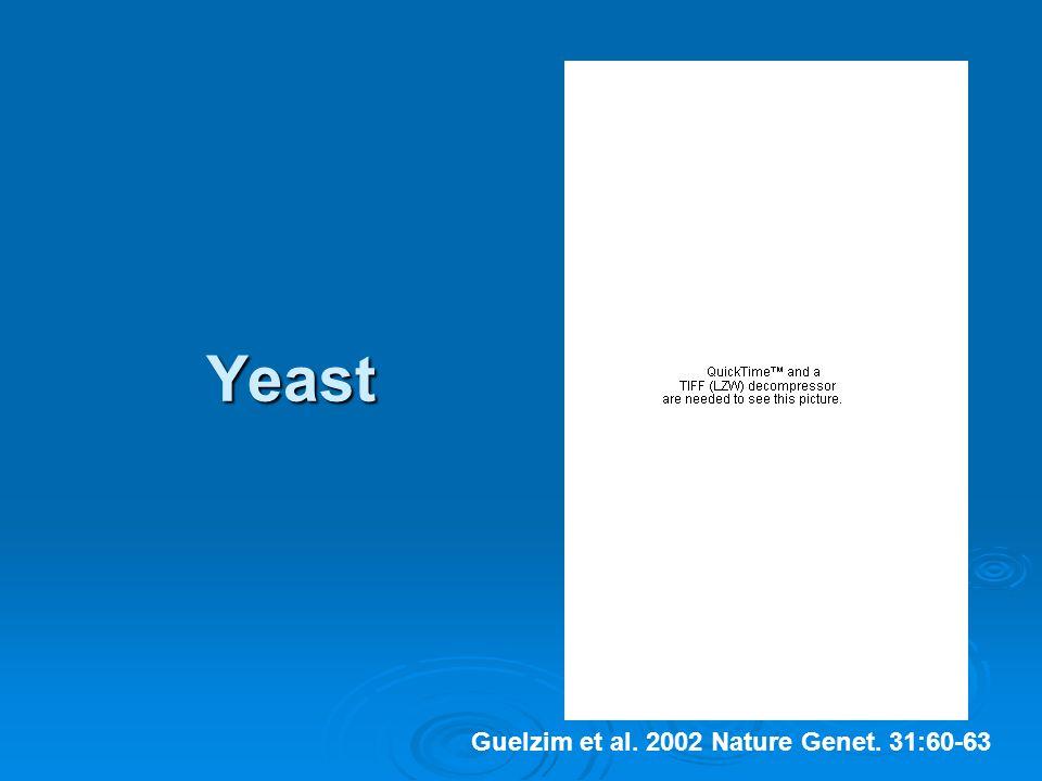 Yeast Guelzim et al. 2002 Nature Genet. 31:60-63