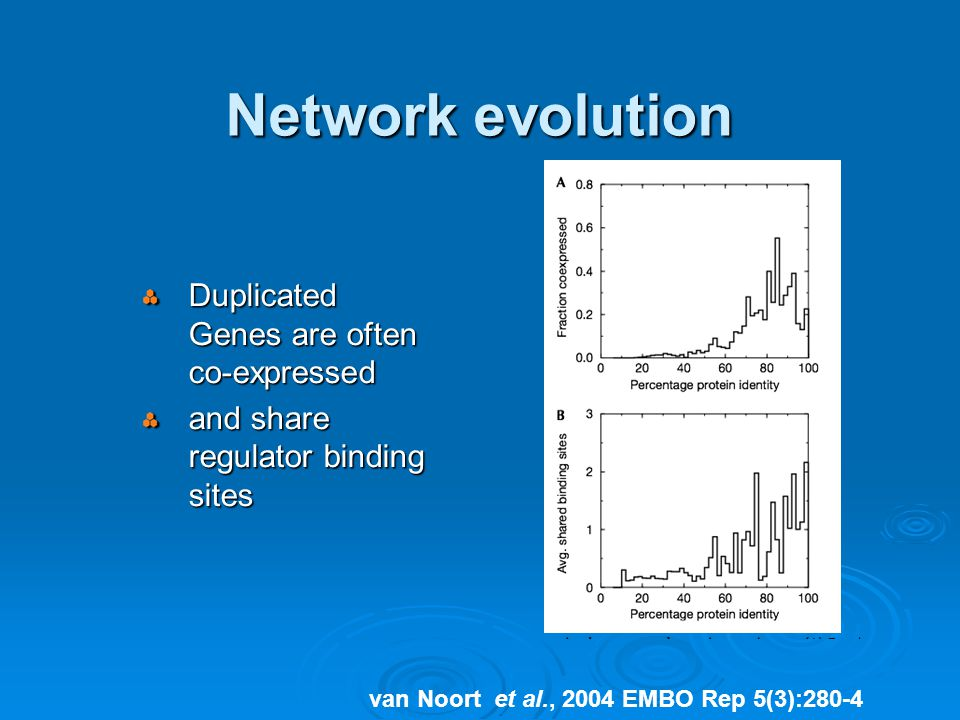 Network evolution Duplicated Genes are often co-expressed and share regulator binding sites van Noort et al., 2004 EMBO Rep 5(3):280-4