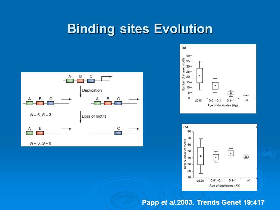 Binding sites Evolution Papp et al,2003. Trends Genet 19:417