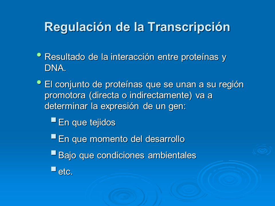 Regulación de la Transcripción Resultado de la interacción entre proteínas y DNA.
