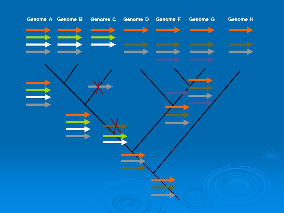 Genome AGenome BGenome CGenome DGenome FGenome GGenome H