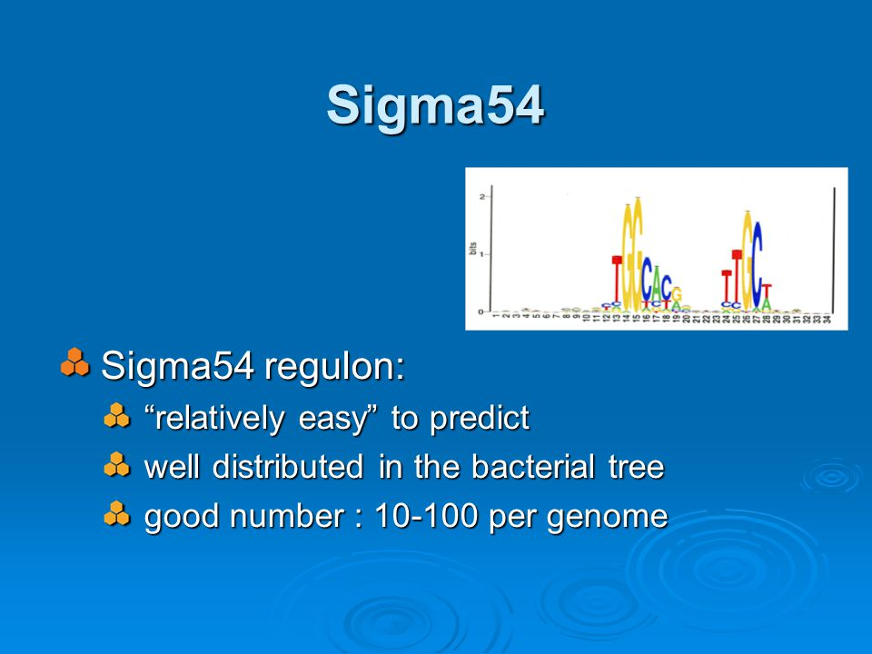 Sigma54 Sigma54 regulon: relatively easy to predict well distributed in the bacterial tree good number : 10-100 per genome