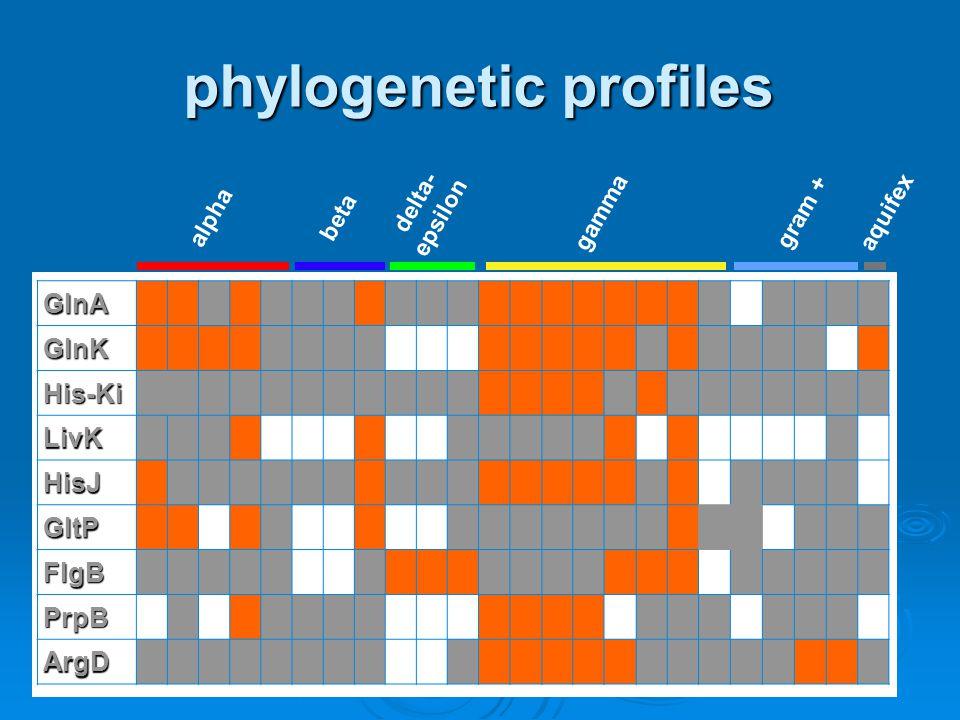 phylogenetic profiles GlnA GlnK His-Ki LivK HisJ GltP FlgB PrpB ArgD alpha beta gamma gram + aquifex delta- epsilon