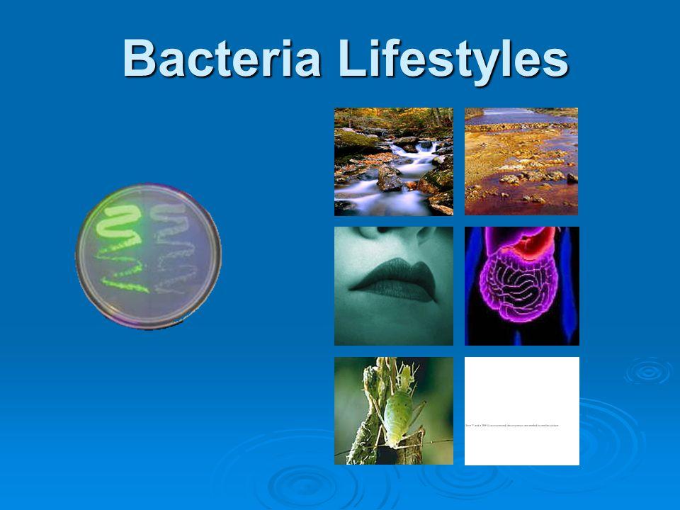 Bacteria Lifestyles