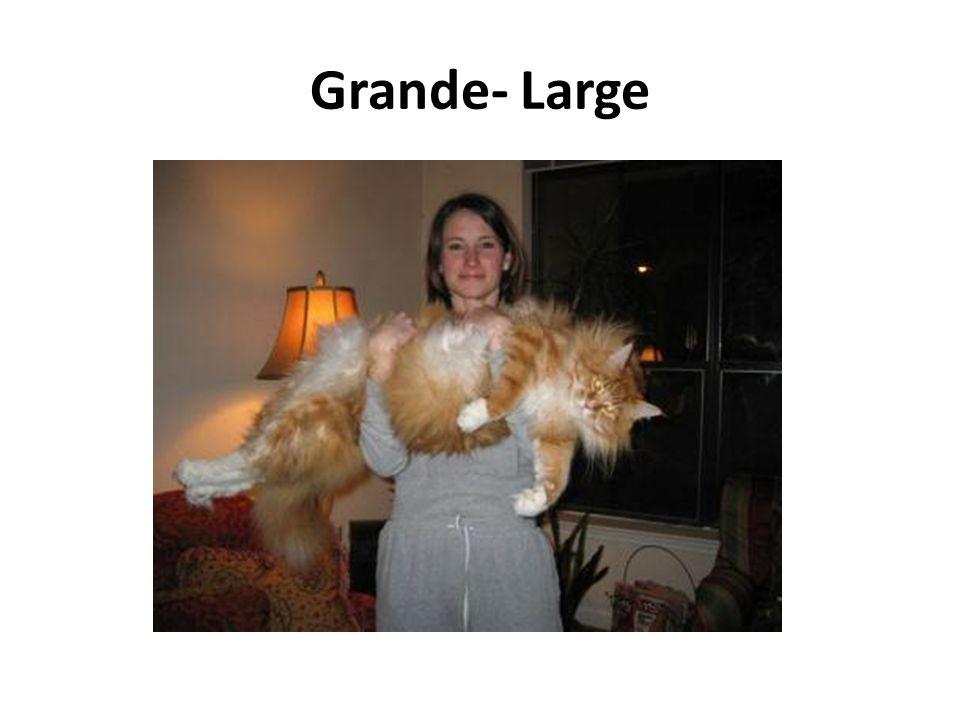 Grande- Large