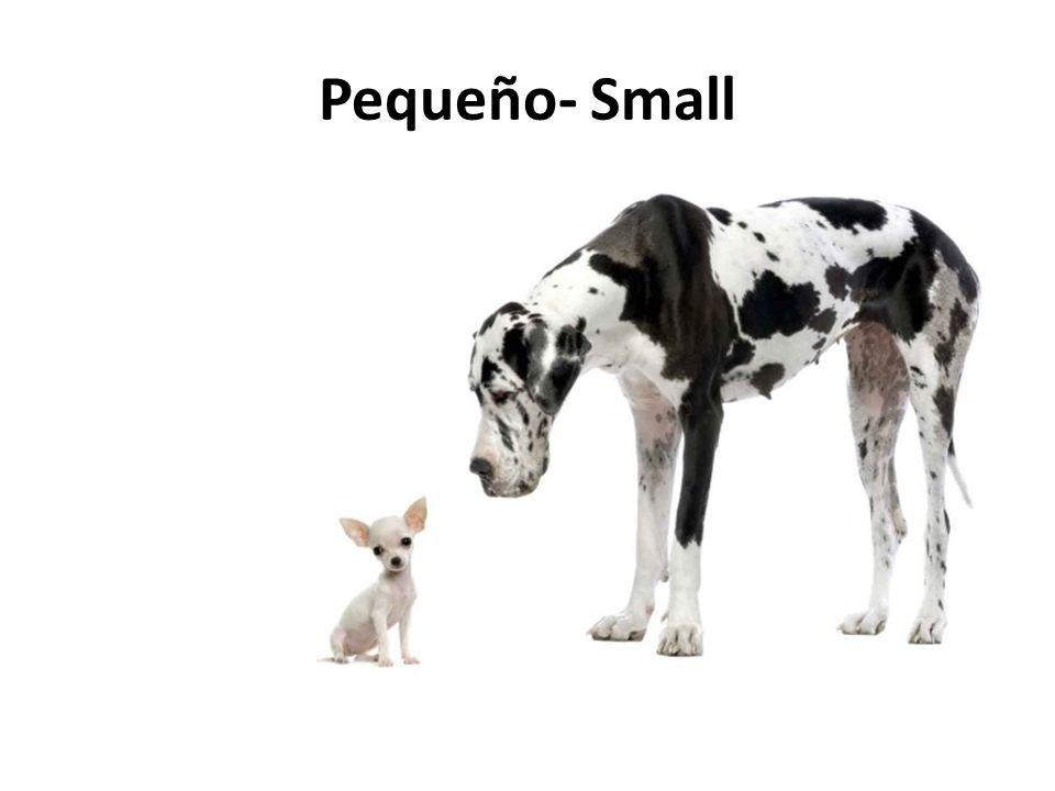 Pequeño- Small