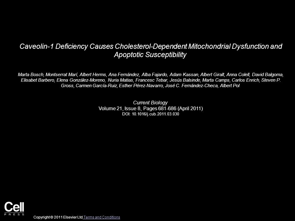 Caveolin-1 Deficiency Causes Cholesterol-Dependent Mitochondrial Dysfunction and Apoptotic Susceptibility Marta Bosch, Montserrat Marí, Albert Herms,
