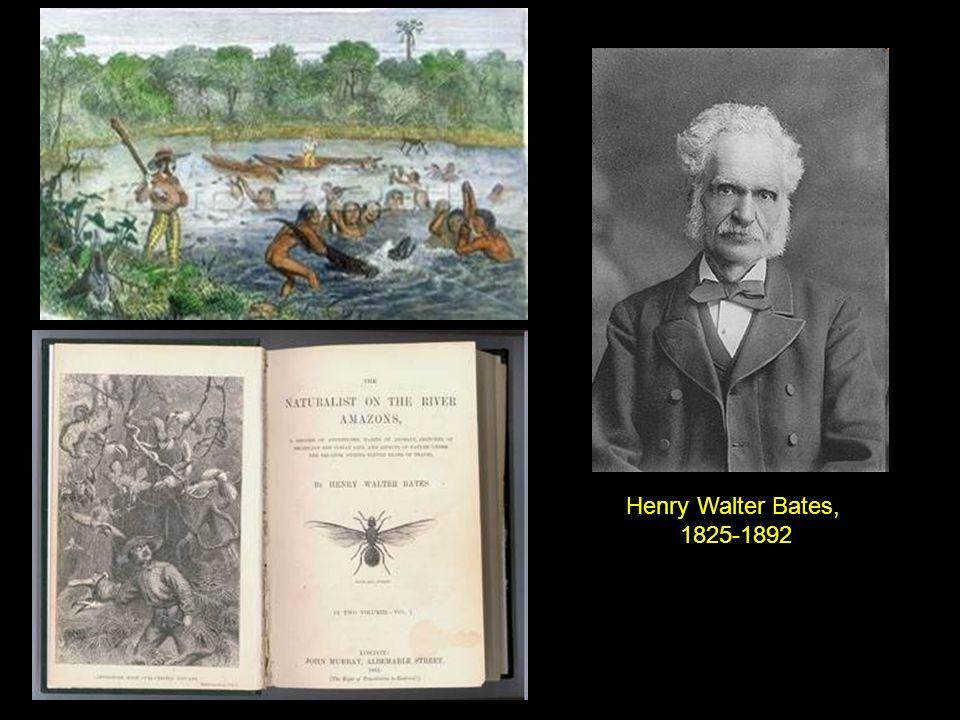 Henry Walter Bates, 1825-1892