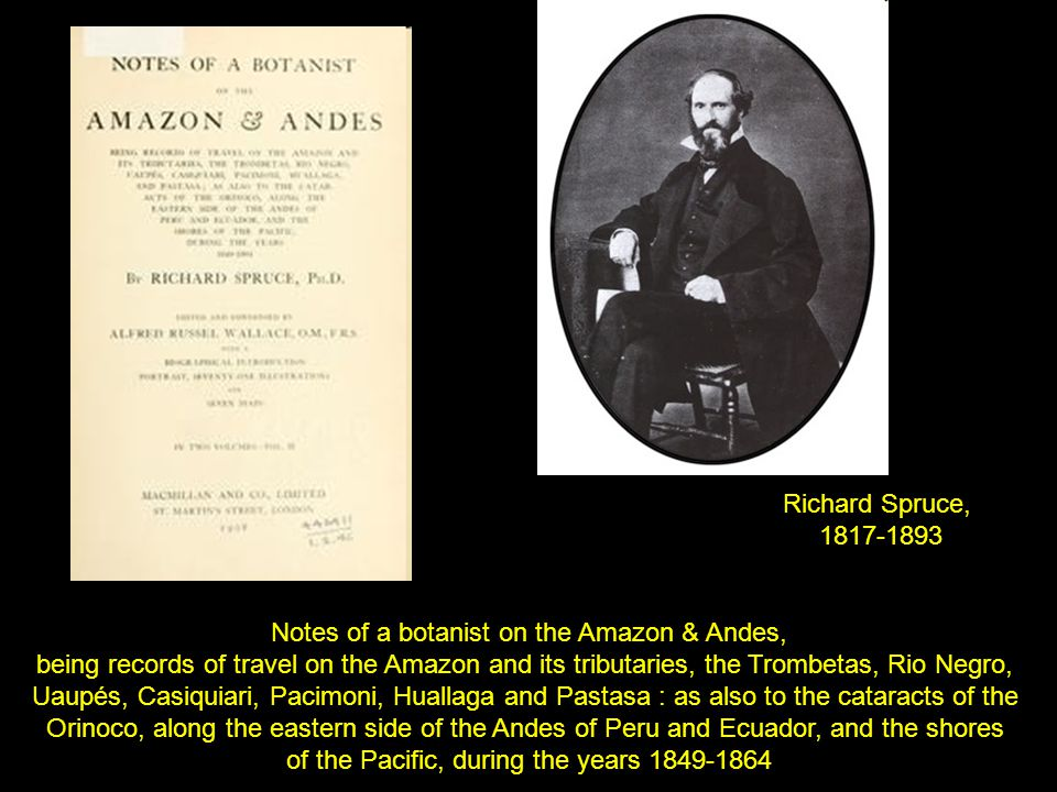Richard Spruce, 1817-1893 Notes of a botanist on the Amazon & Andes, being records of travel on the Amazon and its tributaries, the Trombetas, Rio Negro, Uaupés, Casiquiari, Pacimoni, Huallaga and Pastasa : as also to the cataracts of the Orinoco, along the eastern side of the Andes of Peru and Ecuador, and the shores of the Pacific, during the years 1849-1864