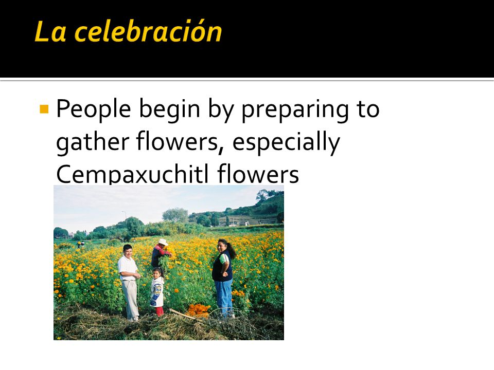  People begin by preparing to gather flowers, especially Cempaxuchitl flowers