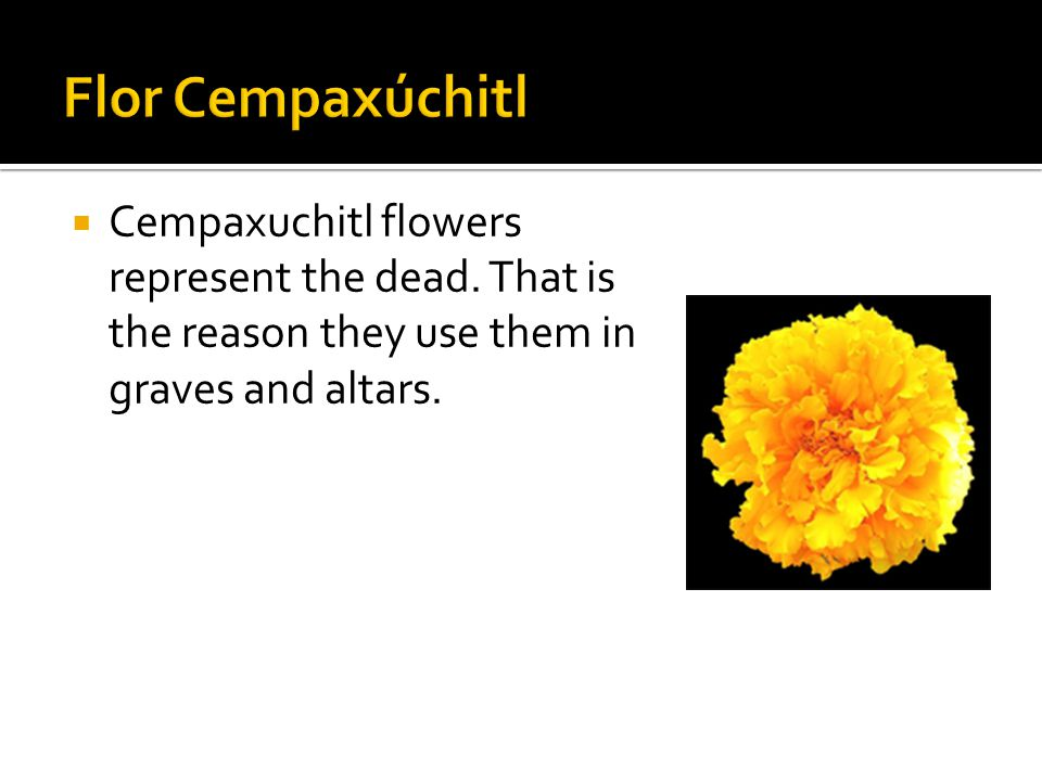  Cempaxuchitl flowers represent the dead. That is the reason they use them in graves and altars.