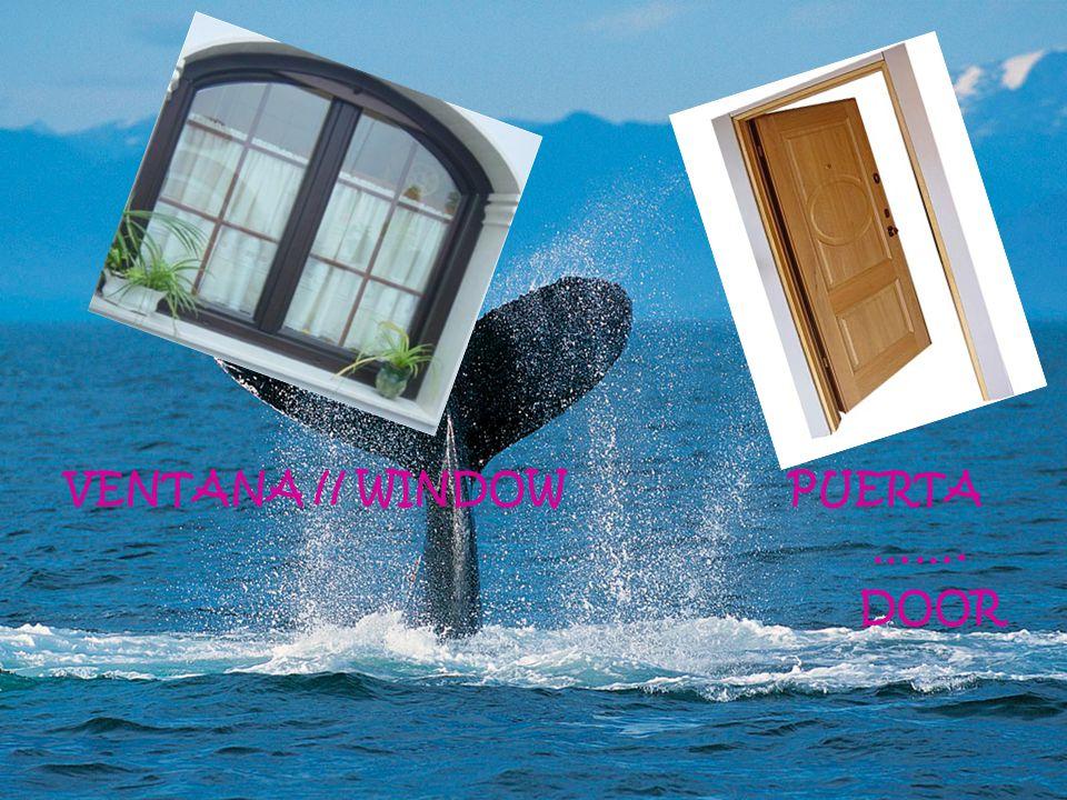 VENTANA // WINDOW PUERTA ……. DOOR