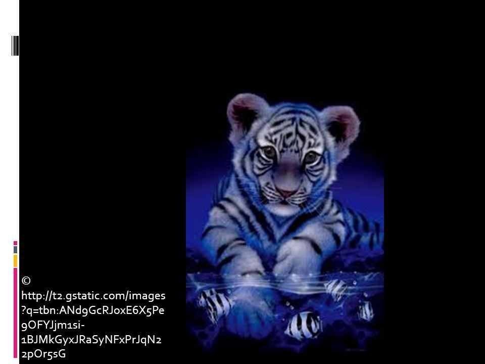 © http://t2.gstatic.com/images ?q=tbn:ANd9GcRJoxE6X5Pe 9OFYJjm1si- 1BJMkGyxJRaSyNFxPrJqN2 2pOr5sG