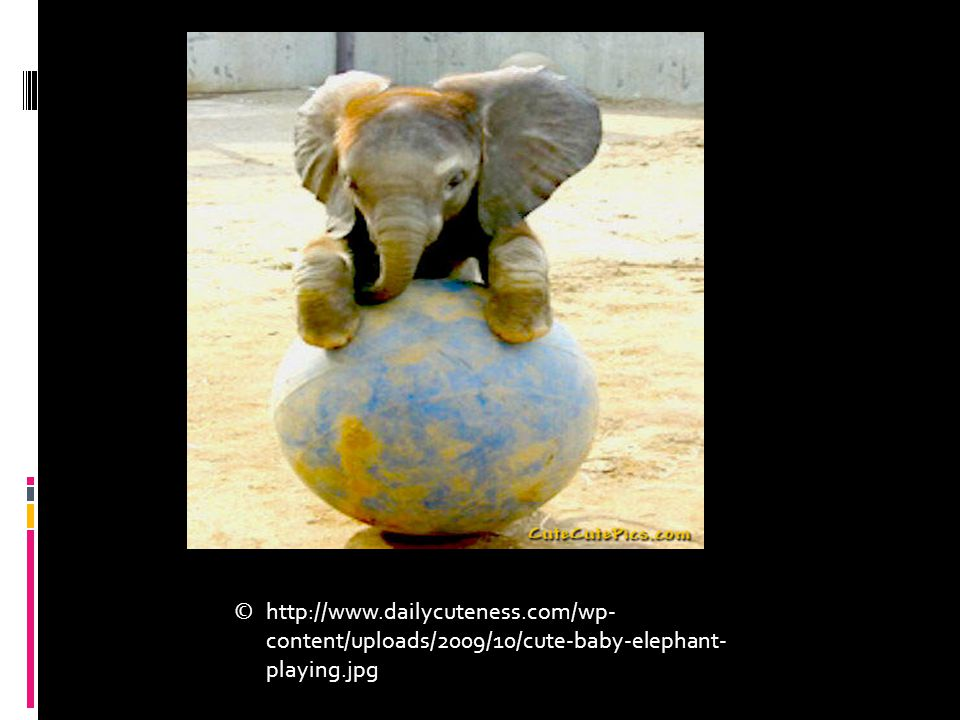 http://www.dailycuteness.com/wp- content/uploads/2009/10/cute-baby-elephant- playing.jpg ©