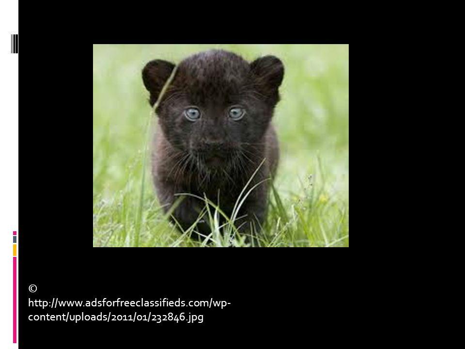 © http://www.adsforfreeclassifieds.com/wp- content/uploads/2011/01/232846.jpg