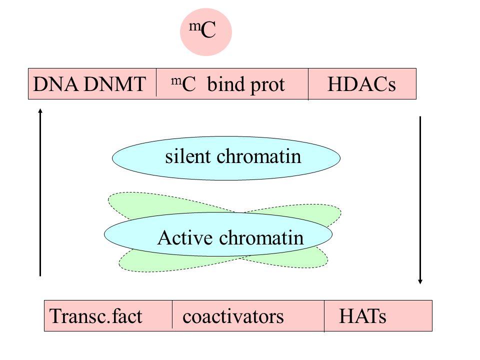 m C DNA DNMT m C bind prot HDACs Active chromatin silent chromatin Transc.fact coactivators HATs