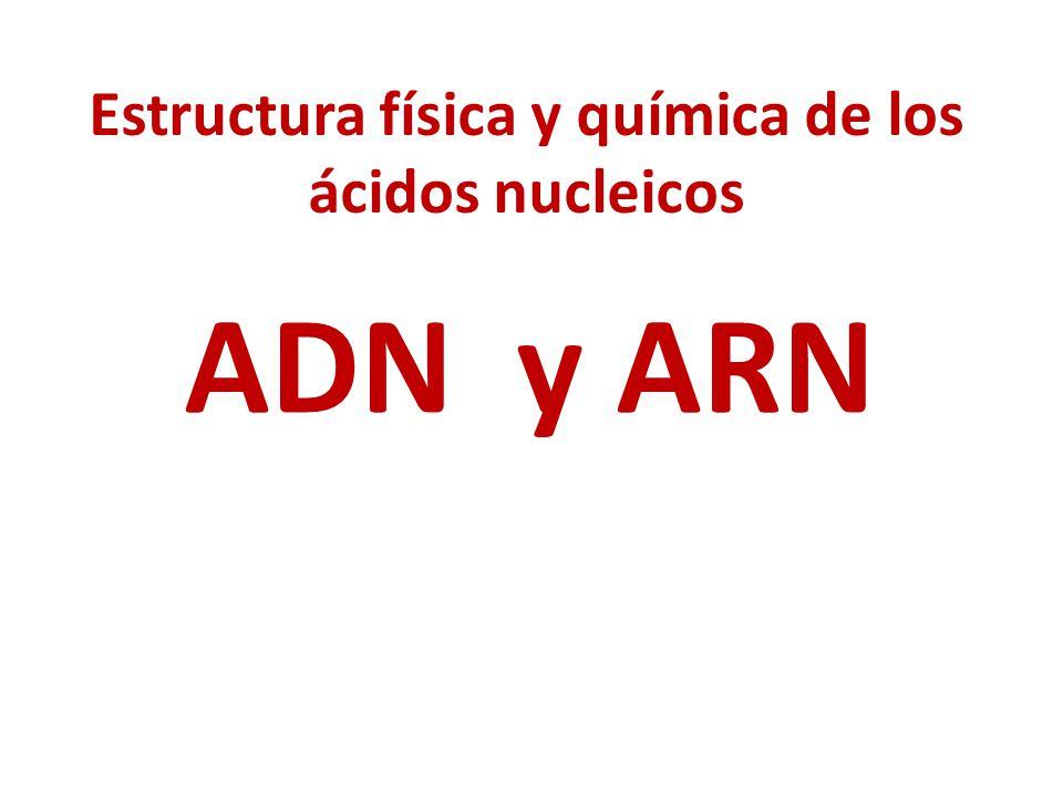 Estructura física y química de los ácidos nucleicos ADN y ARN