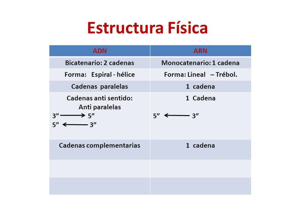 Estructura Física ADNARN Bicatenario: 2 cadenasMonocatenario: 1 cadena Forma: Espiral - héliceForma: Lineal – Trébol.